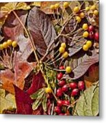 Autumn Berries And Leaves Background  Metal Print