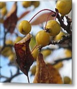Autumn Berry Branch Metal Print