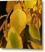 Autumn Birch In Southern Oregon Metal Print