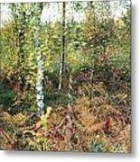 Autumn Birchh Forest Metal Print