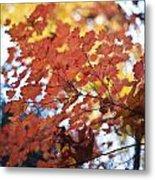 Autumn Brilliance Metal Print