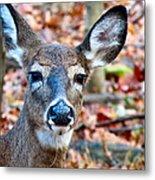 Autumn Buck Metal Print