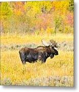 Autumn Bull Limited Edition Metal Print