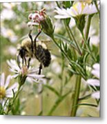 Autumn Bumblebee And Flowers Metal Print