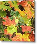 Autumn Collage Metal Print