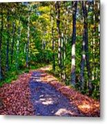 Adirondack Color 53 Metal Print