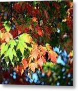 Autumn Color Medley Metal Print