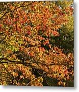 Autumn Colors In Pa Metal Print