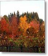 Autumn Colors In The Vineyard Metal Print