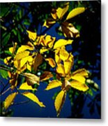 Autumn Comes To The Courthouse Metal Print