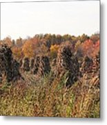Autumn Corn Metal Print