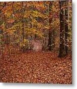 Autumn Creekside Trail Metal Print