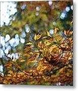 Autumn Crescendo Metal Print