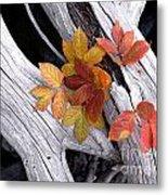 Autumn Driftwood 2 Metal Print