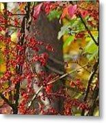 Autumn Excellence 6181 Metal Print