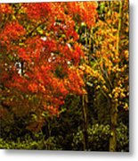 Autumn Fall Tree In Purchase New York Metal Print