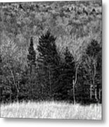 Autumn Field Bw Metal Print