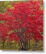 Autumn Flame Metal Print