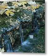 Autumn Foliage Floats Upon The Surface Metal Print
