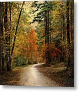 Autumn Forest 4 Metal Print by Jai Johnson