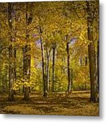 Autumn Forest Scene In West Michigan No.1140 Metal Print