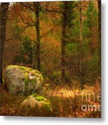 Autumn Forest Walk Metal Print