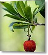 Autumn Fruits In Red Metal Print