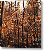 Autumn Glory Metal Print by Chris Hill