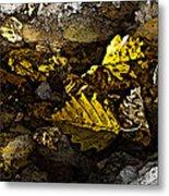 Autumn Gold Metal Print