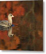 Autumn Gull Metal Print