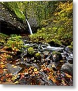 Autumn Horsetail  Metal Print