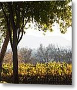 Autumn In A Vineyard Metal Print