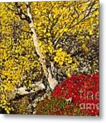 Autumn In Finland Metal Print