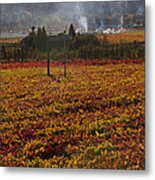 Autumn In Napa Valley Metal Print