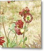 Autumn In The Garden  Metal Print by Pamela Patch