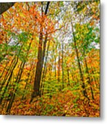 Autumn In The Hocking Hills Metal Print