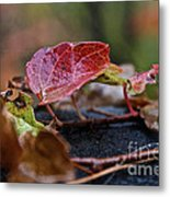 Autumn Ivy In Red Metal Print