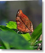 Autumn Leaf Butterfly Metal Print
