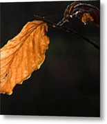 Autumn Leaf Metal Print by Frits Selier