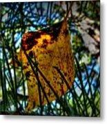 Autumn Leaf In The Pine Needles Metal Print