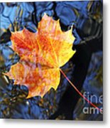 Autumn Leaf On The Water Level Metal Print