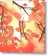 Autumn Leaves Ablaze With Color Metal Print