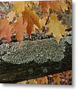Autumn Leaves And A Lichen-covered Log Metal Print