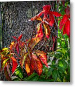 Autumn Leaves High On The Tree Trunk Metal Print
