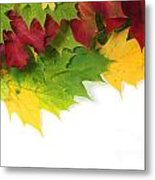 Autumn Leaves In Colour Metal Print