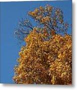 Autumn Leaves In Tn Metal Print