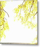 Autumn Leaves On Branch With Bridge In Background, Close-up Metal Print by Johner Images