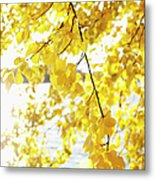 Autumn Leaves On Branch With Lake In Background, Close-up Metal Print