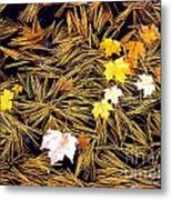 Autumn Leaves On Straw On Water Metal Print