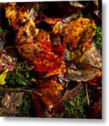 Autumn Leaves On The Moss Metal Print